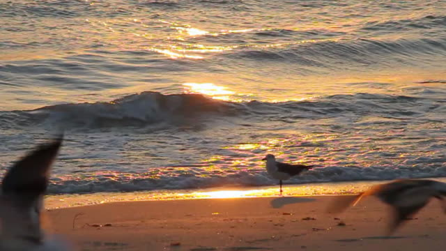 ms slo mo  seagull standing still  others birds fly on beach / miami, florida, united states - seagull stock videos & royalty-free footage