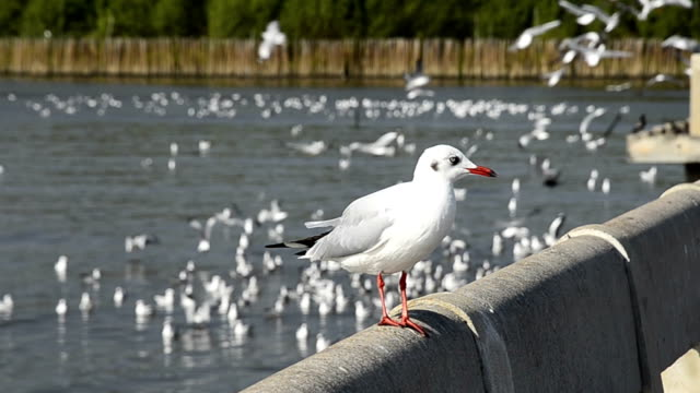 seagull standing - realisticfilm stock videos and b-roll footage