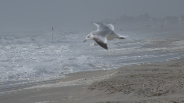 A seagull struggles to fly as powerful gale force winds churn up the ocean into a white froth and waves batter the coastline at Rockaway Beach in New...