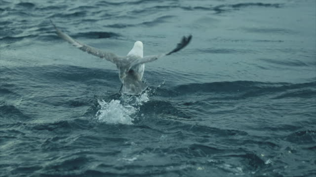 seagull takes off from the water - seagull stock videos and b-roll footage