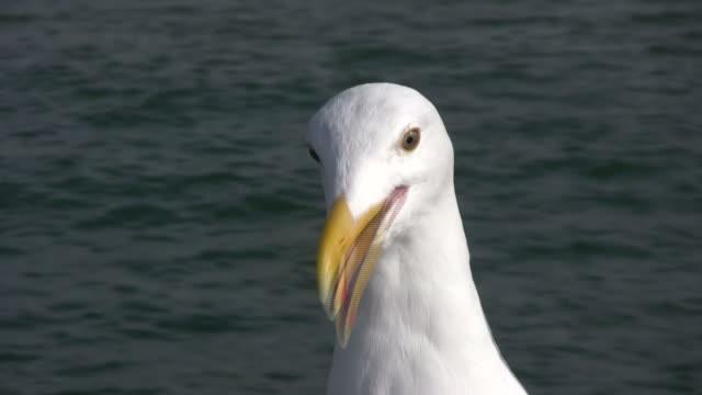 HD: Seagull Talks to Camera