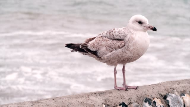 seagull - seagull stock videos & royalty-free footage