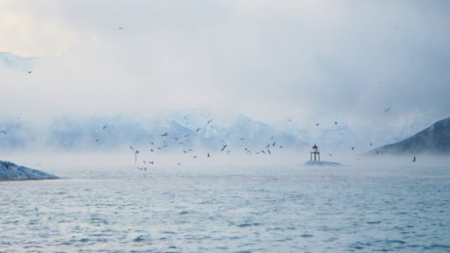 seagulls above misty sea. - buoy stock videos & royalty-free footage