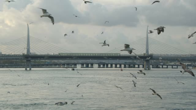 seagulls and bosphorus(slow motion) - istanbul province stock videos & royalty-free footage