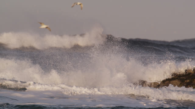 seagulls and waves on arctic coastline, norway - breaking wave stock videos & royalty-free footage