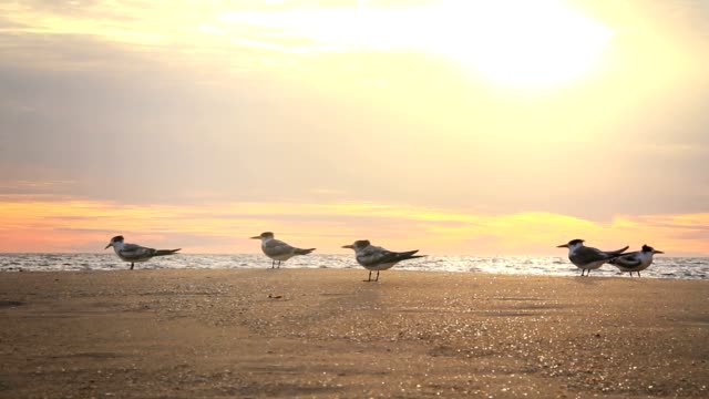 seagulls by the ocean at sunset - pastel stock videos & royalty-free footage