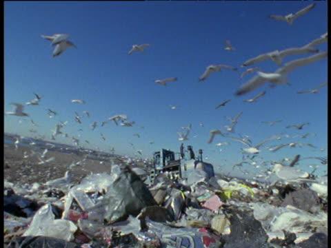 seagulls circle rubbish dump landing on waste giant steel spiked vehicle crushes trash - ダンプカー点の映像素材/bロール