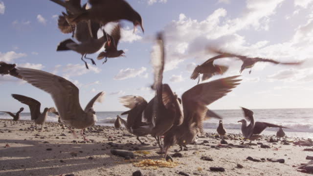 seagulls eat chips on beach, slow motion - seagull stock videos & royalty-free footage