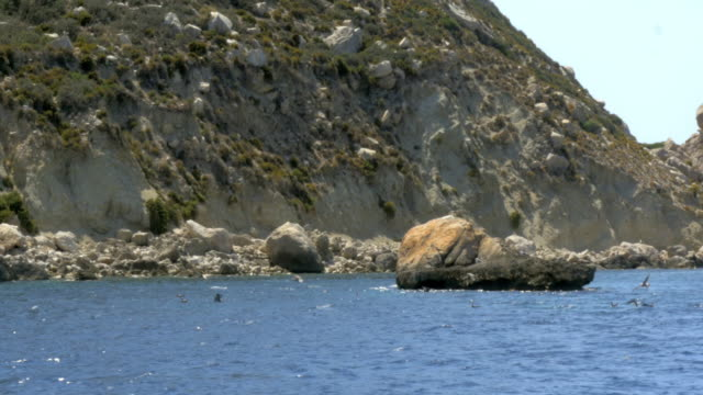 Seagulls fishing near the shore