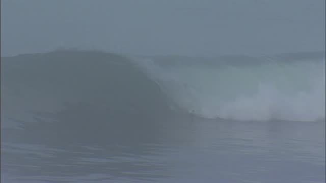 ms seagulls fly across frame as unidentifiable surfer wipes out on crashing wave in santa cruz california on a foggy day - falla av bildbanksvideor och videomaterial från bakom kulisserna