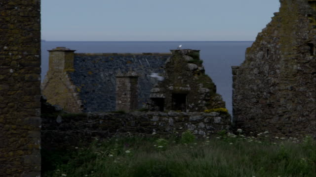 Seagulls fly around the ruins of Dunnottar Castle. Available in HD.
