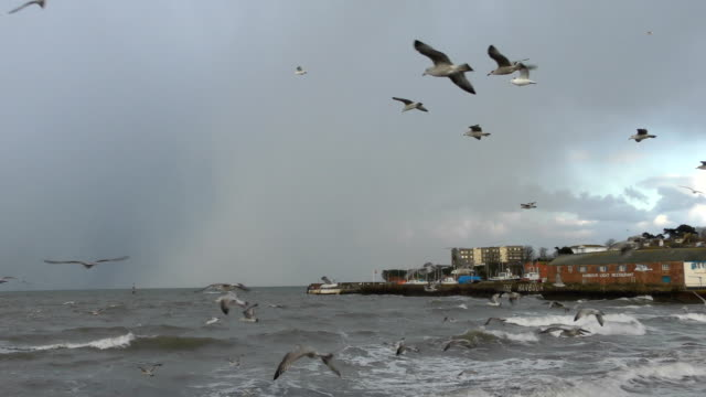 "seagulls fly into the wind as ""the beast from the east"" storm approaches / paignton harbour in the background - devon stock videos & royalty-free footage"