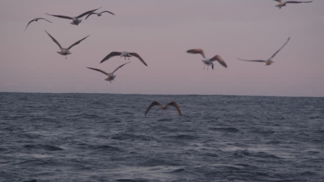 seagulls fly low over sea, norway - seagull stock videos & royalty-free footage