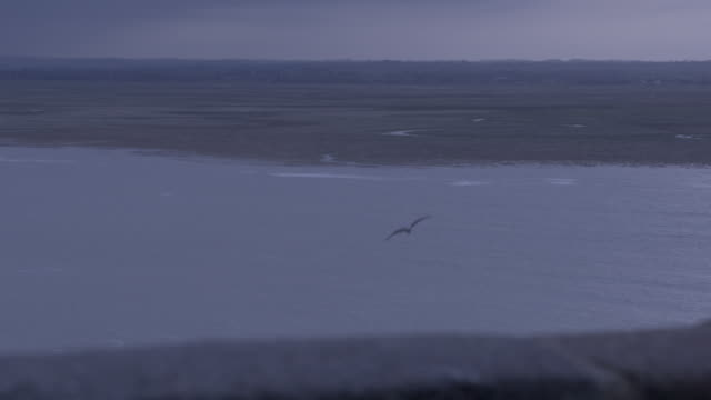 seagulls fly over coast at twilight - la manche stock videos and b-roll footage