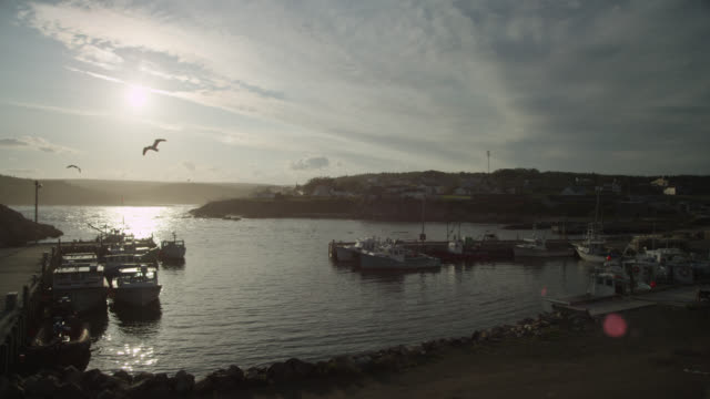 """seagulls fly over harbour at sunset, nova scotia, canada - """"bbc natural history"""" stock videos & royalty-free footage"""