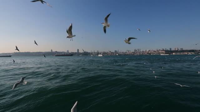 vídeos y material grabado en eventos de stock de gaviotas volando en el cielo azul de hélice - costa de oregón