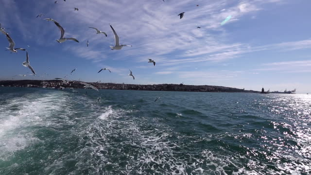 stockvideo's en b-roll-footage met seagulls fly overhead in clear blue sky - meeuw