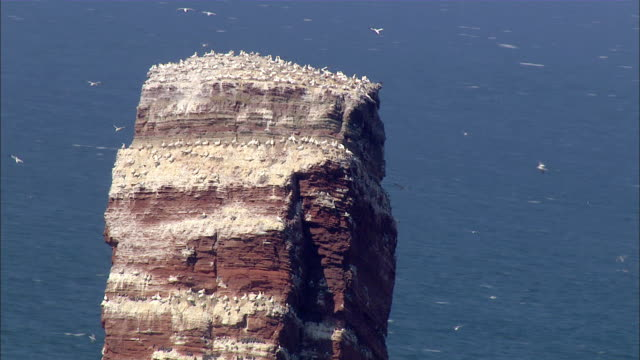 AERIAL MS DS Seagulls flyin around small mountain at ocean / Heligoland, Schleswig-Holstein, Germany