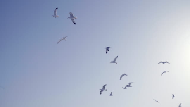 seagulls flying - 4k - seagull stock videos and b-roll footage