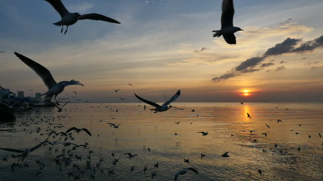 seagulls flying above sea at sunset. - flock of birds stock videos & royalty-free footage