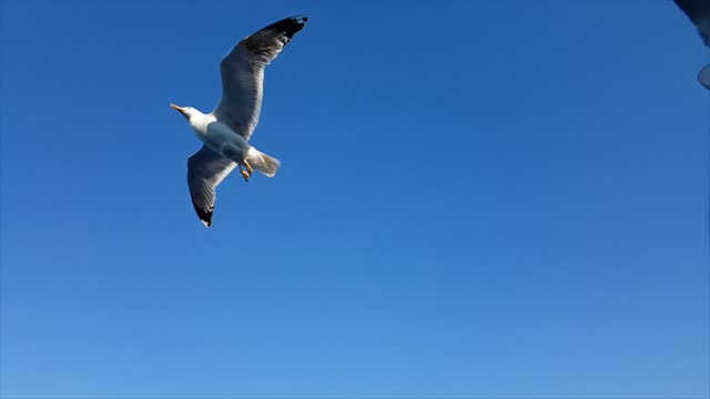 seagulls flying above sea - seagull stock videos & royalty-free footage