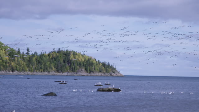 Seagulls flying above St. Lawrence River