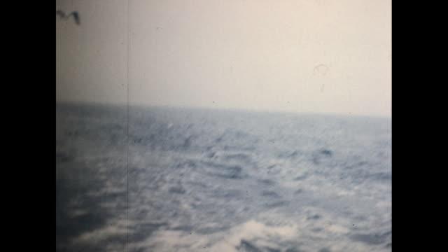 vídeos de stock e filmes b-roll de seagulls flying above the ocean in the sky shot taken from fast moving ship - organismo aquático