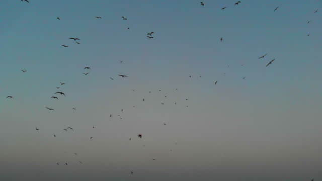 seagulls flying above the sea - horizon stock videos & royalty-free footage