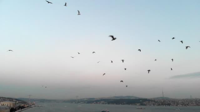 seagulls flying above the sea - byakkaya stock videos and b-roll footage