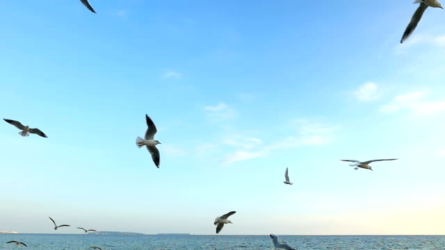 seagulls flying above the sea - horizon over water stock videos & royalty-free footage