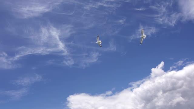 Möwen fliegen über den Himmel Super-Zeitlupe