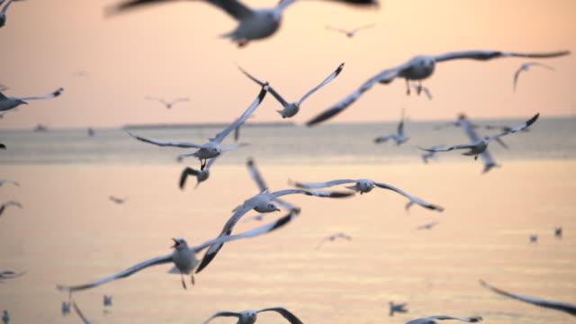 vídeos y material grabado en eventos de stock de gaviotas vuelan al atardecer - antena parte del cuerpo animal
