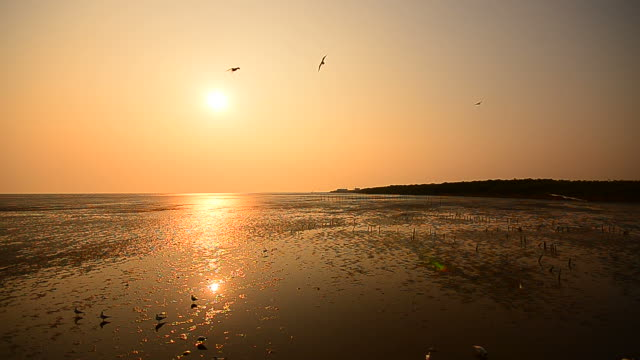 seagulls flying at the sea with sunset backgrounds - full hd format stock videos & royalty-free footage
