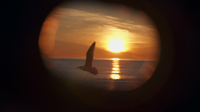 Seagulls flying in front of porthole at sunset