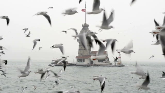 seagulls flying in front of the maiden's tower - istanbul province stock videos & royalty-free footage
