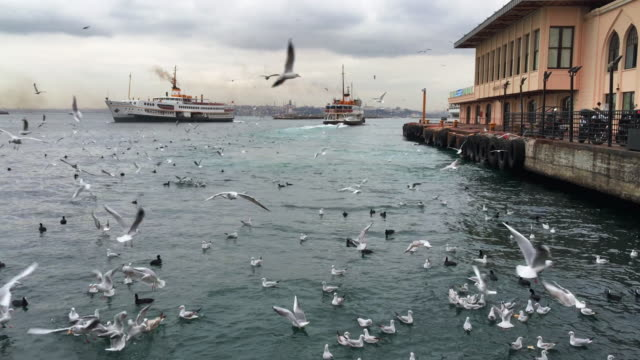 seagulls flying in istanbul, turkey - ferry stock videos and b-roll footage