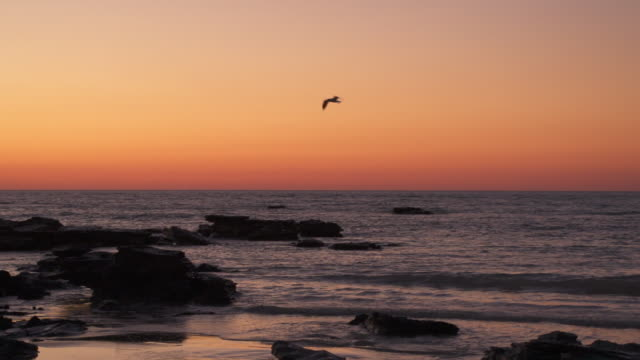 seagulls flying in sunset sky - water's edge stock videos & royalty-free footage