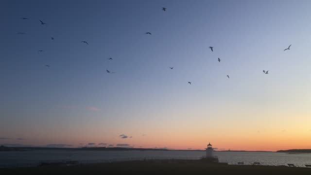 vidéos et rushes de seagulls flying in the sky during sunrise  at bud light lighthouse in portland, maine usa - mouette