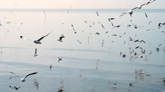 seagulls flying on the sea - seagull stock videos and b-roll footage