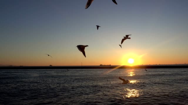 seagulls flying on the sea - fishing rod stock videos & royalty-free footage