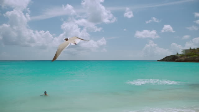 WS TS Seagulls flying over Maho Beach / St. Maarten
