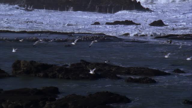 slo mo, pan seagulls flying over ocean - nordatlantik stock-videos und b-roll-filmmaterial