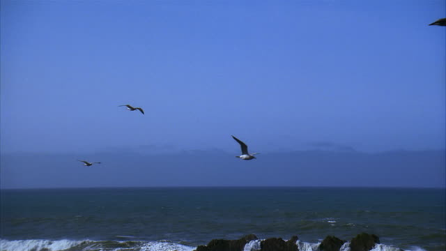 slo mo, pan seagulls flying over ocean - aquatic organism stock videos & royalty-free footage