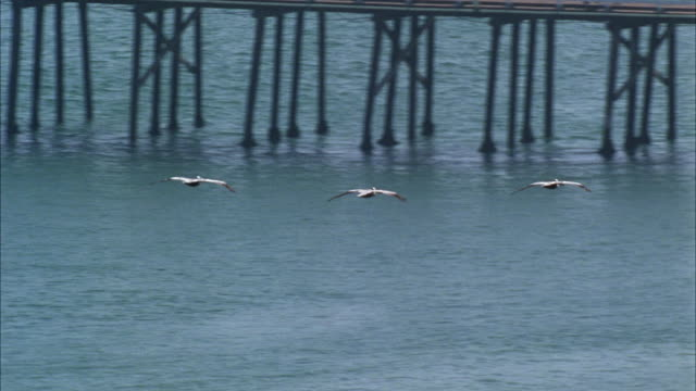 WS PAN Seagulls flying over pier and surfer surfing in background