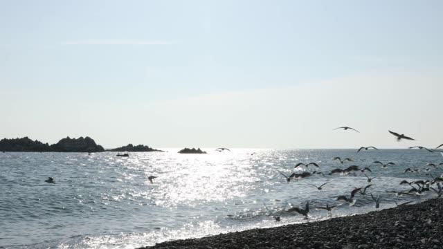 stockvideo's en b-roll-footage met seagulls flying over the bonggil beach in gyeongju, kyongsangbuk-do province - dierlijk gedrag