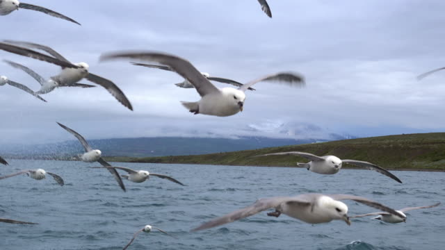 vídeos de stock, filmes e b-roll de seagulls flying over the ocean - gaivota
