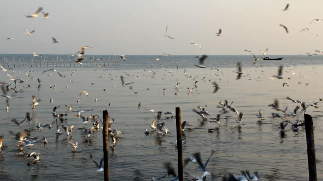 seagulls flying over the sea - radio controlled handset stock videos and b-roll footage