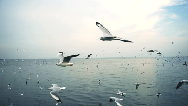 seagulls flying over the sea - gabbiano video stock e b–roll