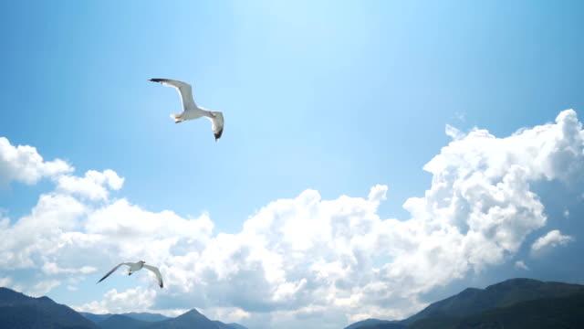 vidéos et rushes de mouettes volant au-dessus de la mer - bouche des animaux