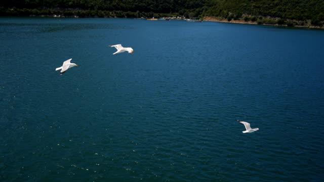 海の上を飛んとかもめ - 動物の翼点の映像素材/bロール
